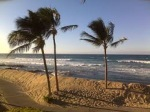 Hawaii Palms Beach